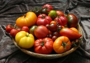 томаты для Ленинградской области
